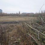 Stadion Szyca (2) Przycięte gałęzie na murawie stadionu